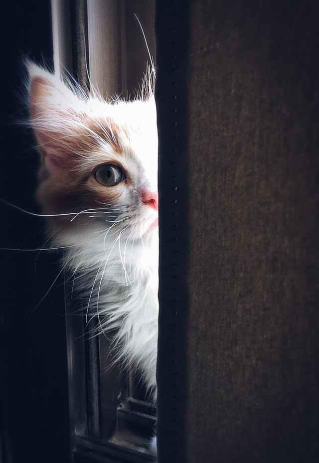adorable animal cat close up